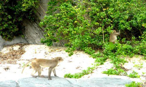 Halong Bay 3 Days 2 Nights | 1 night on boat | 1 night in Cat Ba Monkey Island